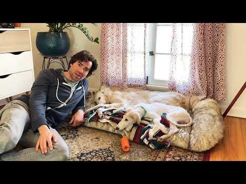 Episode 6 - Owning a Borzoi (Puppy) - Ora's Intro