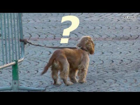 Niedlicher Hund ausgesetzt ? Cute abandoned dog ? Cocker Spaniel....Happy end ❤