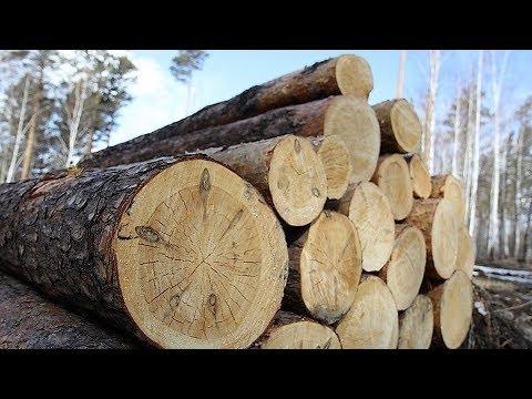 Полмиллиона рублей за 90 деревьев: в Кондинском районе осудили чёрного лесоруба