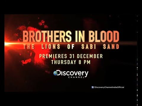 Popular Videos - Brothers in Blood: The Lions of Sabi Sand