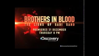 Brothers in blood: The Lions Of Sabi Sand - Hindi