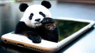How to make panda 3d image in PicsArt