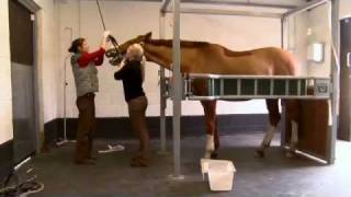 Repeat youtube video The Horse Vets
