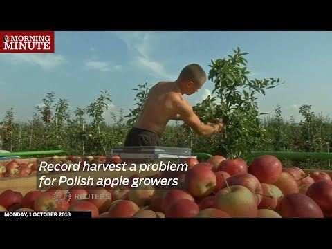 Record harvest a problem for Polish apple growers