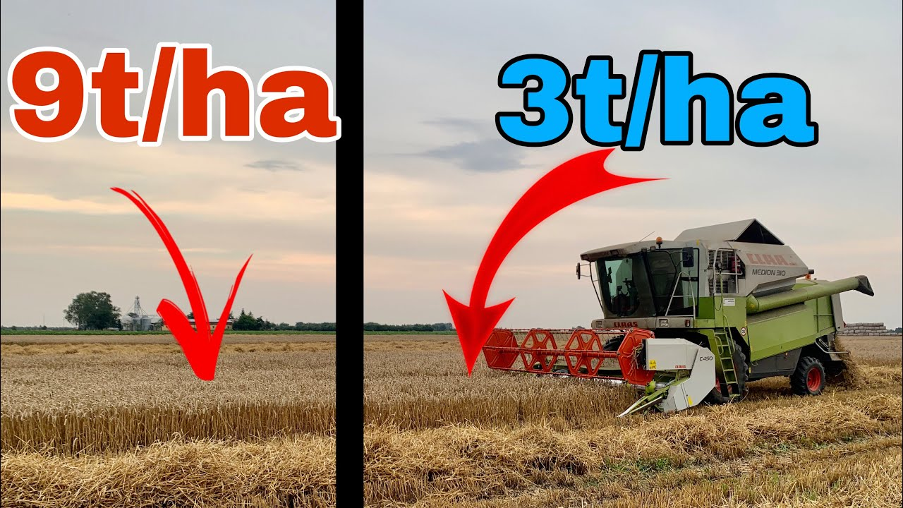 #371- Mozaika zabiera dobre plony! Żniwujemy w pszenicy 2020! Problem z powojem?!