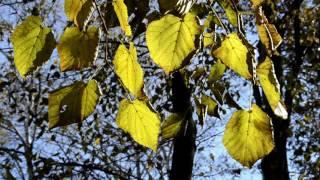Листья желтые -  Клип с А. Варум и Д. Маликовым