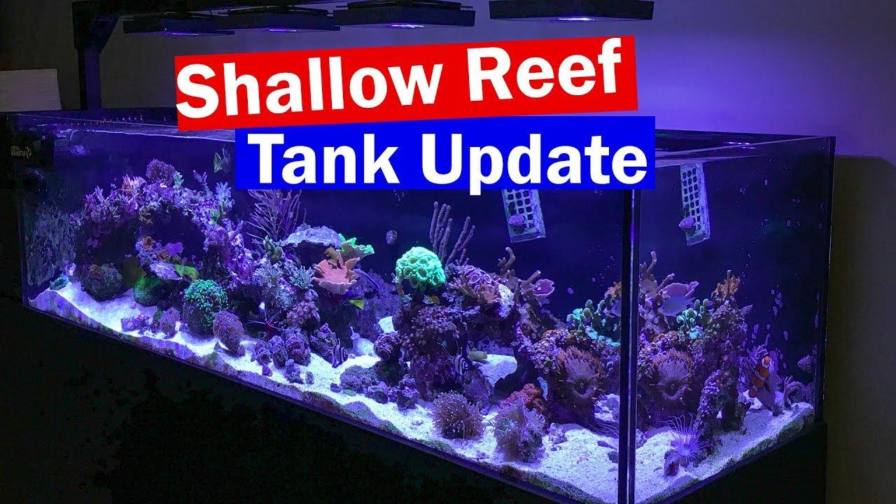 Aquascape Ideas Peninsula Reef Tank Aquascape