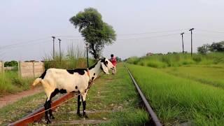 Train vs Goat    New Moral Story for Kids    Social Message Video