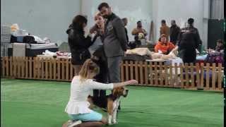28-29 марта Тбилиси выставка собак бигль