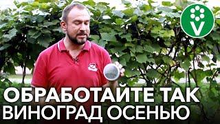 ОЗДОРОВИТЕ ВИНОГРАД ПОСЛЕ СБОРА УРОЖАЯ! Обработка винограда осенью от болезней