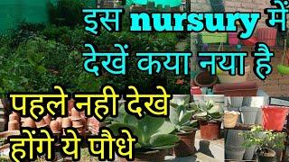 इस  nursury में देंखे कया नया है,पहले नही देखे होंगे ये पौधे, nursury visit,nursury की सैर मेरे साथ