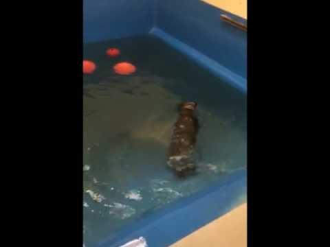 Alaska Sealife Center Works to Rehabilitate Orphan Sea Otters