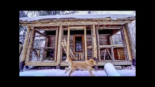 "My Self Reliance Cali at the Cabin | My Dog ""Helps"" Me Build an Addition on My Log Cabin"
