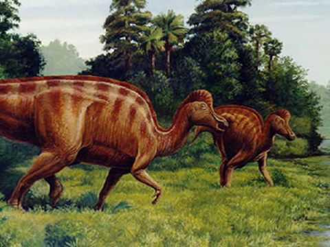 Tribute to Corythosaurus.