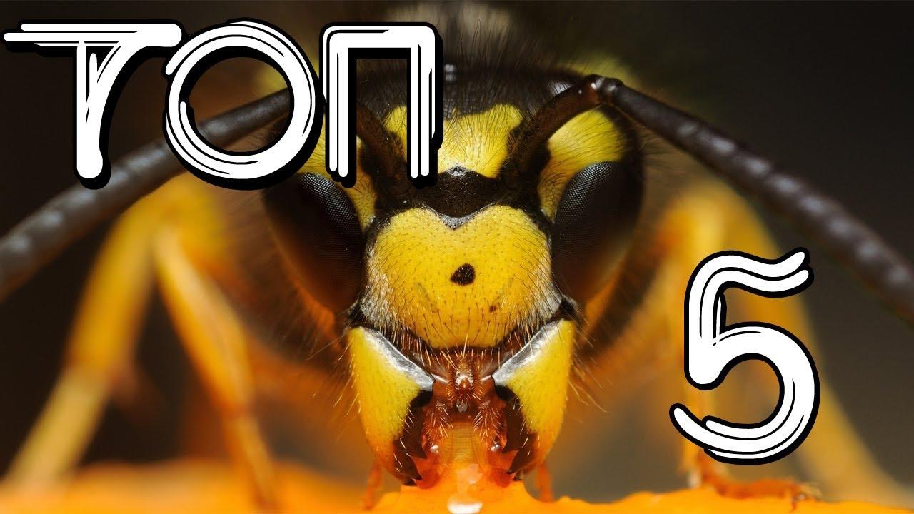 ТОП 5 самых опасных насекомых.  Самые ядовитые насекомые в мире