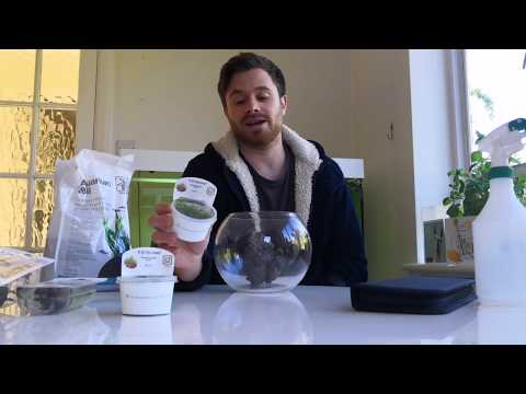 How to set up a PLANTED BOWL Aquascape with NO FILTER!