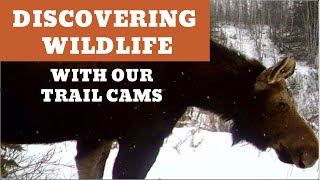 Discovering Wildlife with Our Trail Cameras