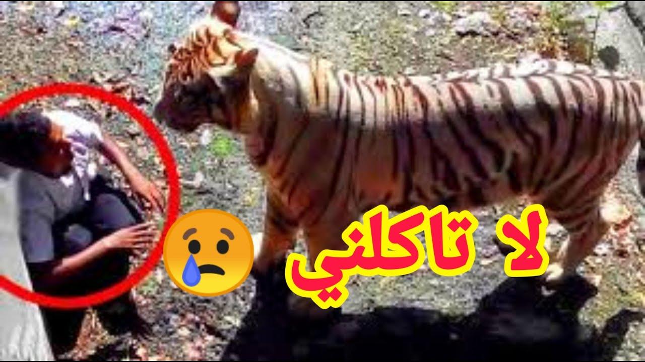 حيوانات مفترسة كادت ان تاكل البشر لو لا هل تصدق Youtube