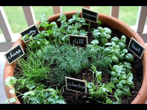 how to grow herbs indoors, Beautiful flower