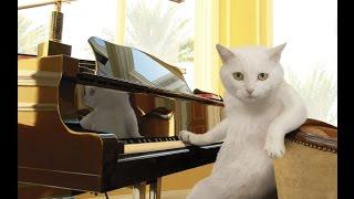 Кошка Играет на Пианино, а Кот Поёт!