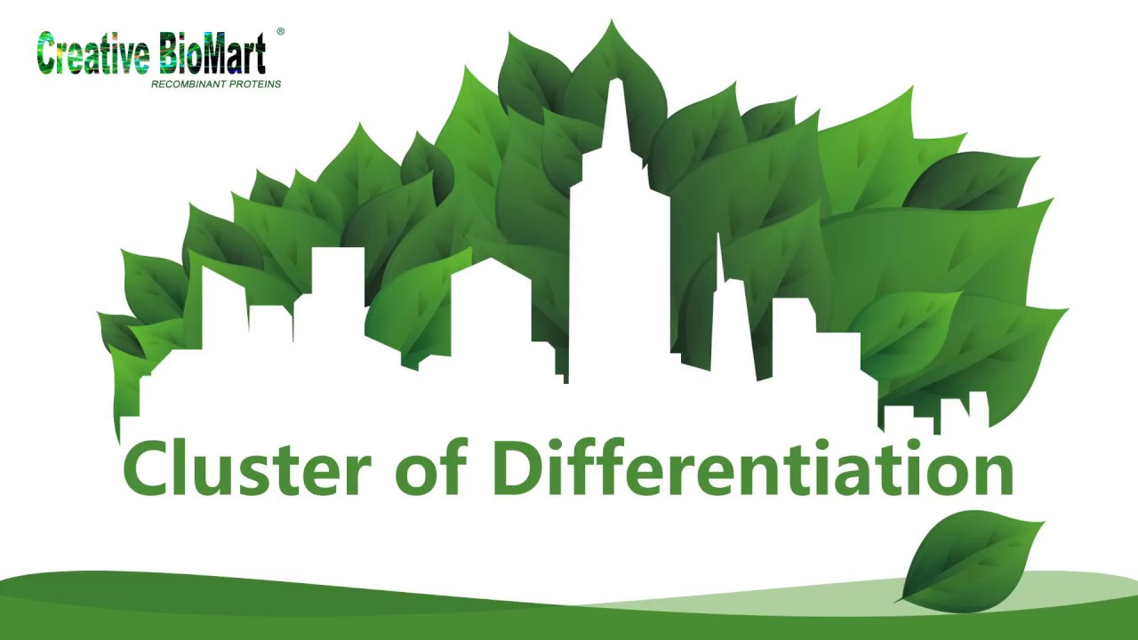 Cluster of Differentiation - Creative BioMart