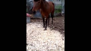 Девушка играет с конем