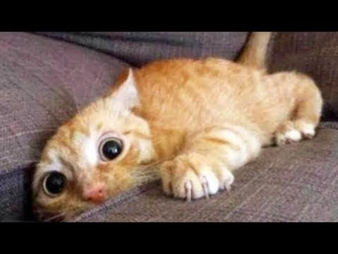 Hilarious Cat Viral Videos 😺😸😹 Ultimate Cat Compilation 2019