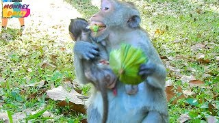 Poor Jane hug baby scare with Mark warm with food |Jane happy get big food to eat |Monkey Daily 2207