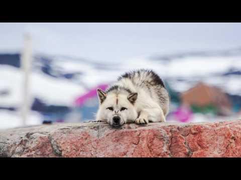Sofia Ekeroot photography - Aasiaat, Grönland 2016