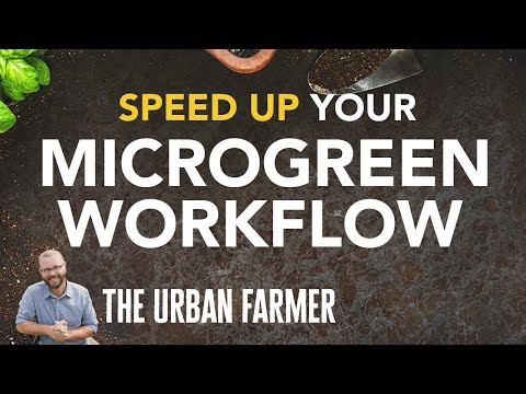 Microgreens Farmer Selling 900 Flats per week shares how to speed up your workflow