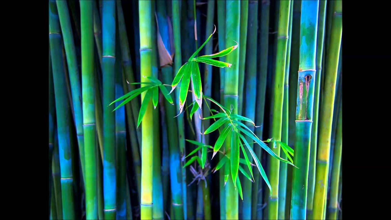 бамбук тв плейлист