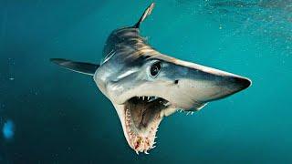 7 Tiburones Prehistóricos más letales