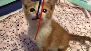 Feral Kittens Learn to Play!