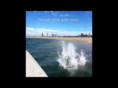 Fastest dog in Australia. cattle dog racing our boat . Fishing, water, fastest dog, jumping dogs