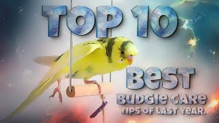 Top 10 Best Budgie Care Tips of Last Year