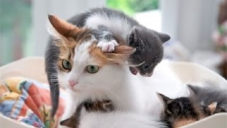 Лучшие мамы в мире. Мамы и детеныши животных 2. #Животные