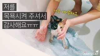 The first bath of a stray kitten that survived the weather of 17 degrees Fahrenheit.