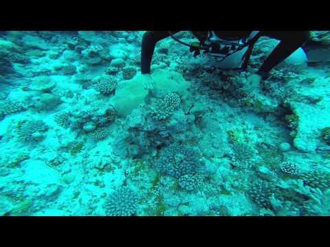 Diving in Niue 2014 by Robert