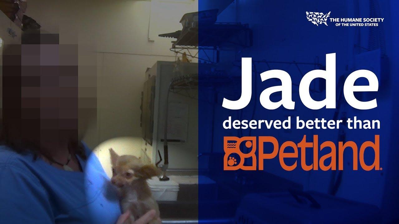 Jade deserved better than Petland