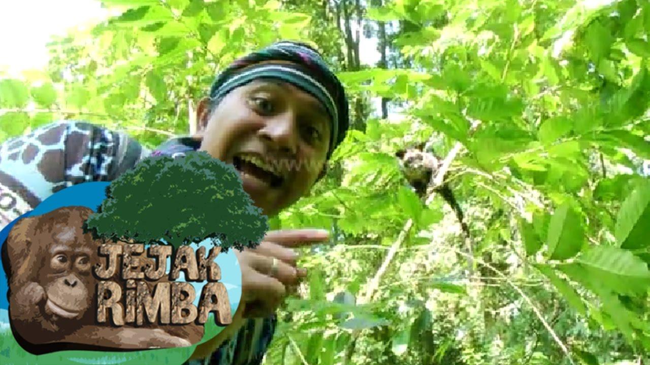 Bela Diri TNI Menjaga Negeri | Yonkav 1 - Kulit Baja