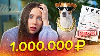 ПОТРАТИЛА МИЛЛИОН НА ПИТОМЦЕВ Сколько денег в месяц мои расходы на животных Elli Di Pets