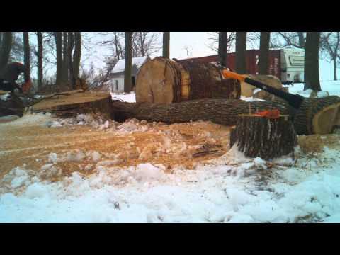 Husqvarna 562xp chainsaw felling ash