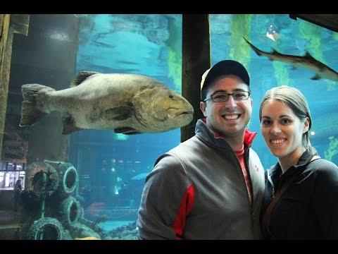 Monterey Bay Aquarium VLOG! - Day 5 - JAN 27 -GRAND CALIFORNIA ADVENTURE TRIP 2015
