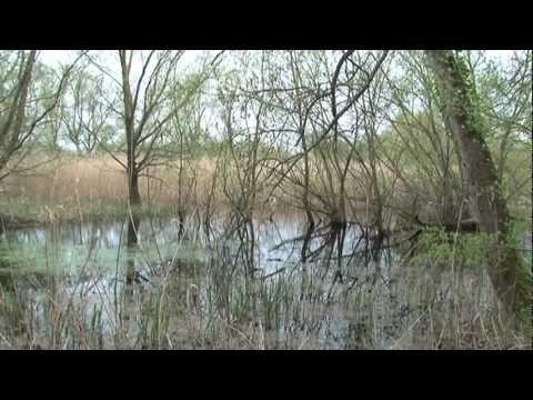 CYPRIEN - CLASH DES GITANSde YouTube · Durée:  6 minutes 32 secondes