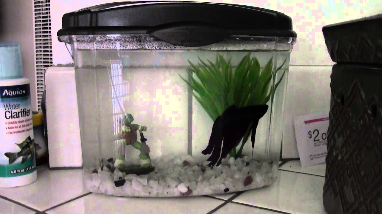 Aqueon 1 2 gallon betta bowl youtube for 2 gallon betta fish tank