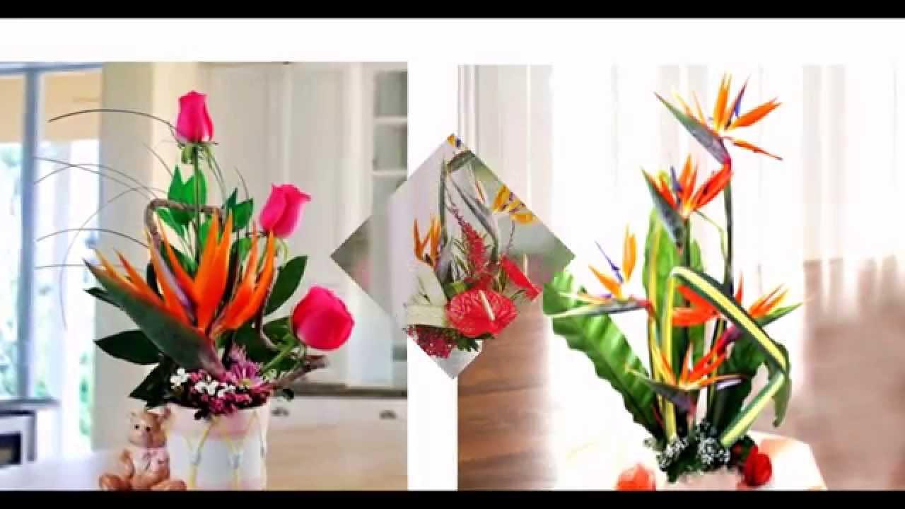 Bird of Paradise Flowers in Singapore | Singapore Florist - YouTube