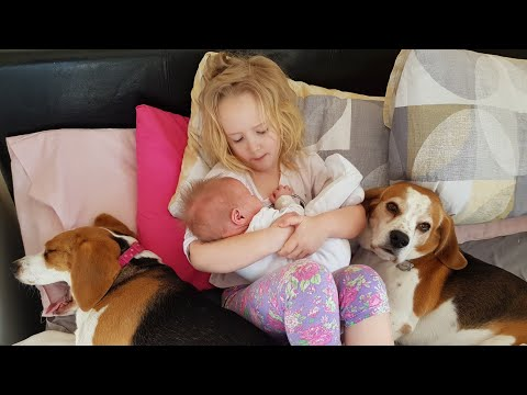 Big Sister and Cute Dogs Taking Care of Newborn Baby   Dogs Love Baby