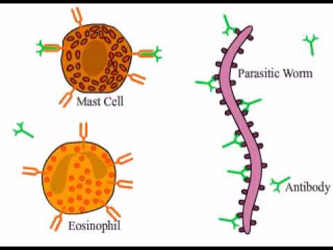 Helminths parasitic worms. Helminth roundworms. Helminthic therapy multiple sclerosis
