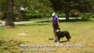 Teaching Cues For Walking And Running On Leash