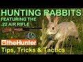 theHunter Hunting Game - HUNTING RABBITS & .22 AIR RIFLE (Tips, Tricks & Tactics)